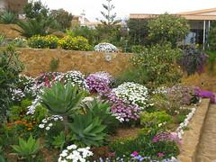 Im Garten 001 (wilhelm.haardt) Tags: antjes blumen peniscola imgarten