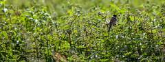 5DSA0994_Lr6_43s1s (Richard W2008) Tags: cathkinmarshwildlifereserve scottishwildlifetrust scotland nature flora fauna