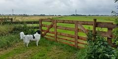 New fence (Max Jongkoen) Tags: fence nederland thenetherlands friday polder hff