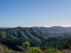 View from the top (hmxhm) Tags: newzealand nature olympus wellington aotearoa zealandia
