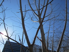 Day 351 - Full circle/Spring equinox (GPrime83) Tags: tree canon bluesky project365 project366 elph100hs clearspringday