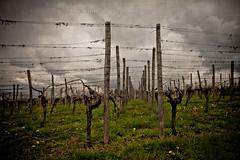 Time to Head Home (laura_bostonthek) Tags: storm clouds landscape vineyard perspective poles esslingen weinberge