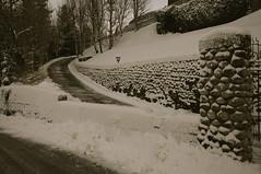 Neve (giacomobielliphotographer) Tags: neve biella nevicata valdengo