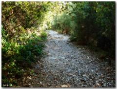 Caminando por el bosque (Nati C.) Tags: naturaleza camino paisaje bosque otoo catalunya montseny efectoorton elsotdelinfern