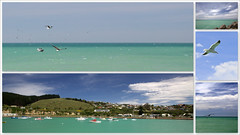 Turquoise waters are not bad either. (Perfectoarts) Tags: seagulls seascapes southisland turquoisewaters newzealandeastcoast ingriddouglasphotography