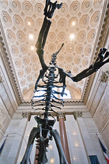American Museum of Natural History (mariocutroneo) Tags: new york history museum natural manhattan american museo storia naturale