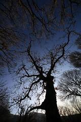 .. (Francesco Terranova) Tags: albero ramo controluce