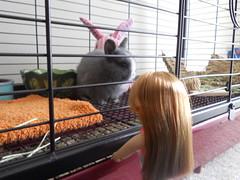 Abby 2 (sakura_chan15) Tags: rabbit bunny netherlanddwarfrabbit