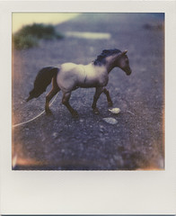 a boy a girl and a tiny toy horse (daveotuttle) Tags: engagement px70 impossibleproject