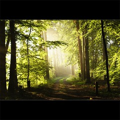 the light inside the forest (Zino2009 (bob van den berg)) Tags: morning trees light summer sunlight green nature ahead silhouette forest landscape licht bomen groen close bright path archive nederland natuur sunny rays leafs oldie deventer landschap takken 2010 archief bladeren bathmen zandpad bospad bobvandenberg thesecretlifeoftrees zino2009