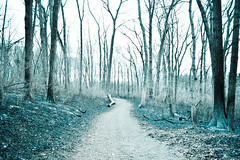 Silent Hill Down The Path (Mike Shaheen) Tags: city trees cold tree strange forest dark fire sticks scary log woods nikon silent path connecticut hill feel logs eerie beaver spooky dirt flame burn ashes burnt adobe ash brook milford racoon effect lightroom efects d3100