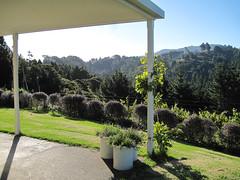 Verander (russelljsmith) Tags: friends newzealand summer vacation holiday plant color tree green sunshine garden fun pillar bach nz vase 2012 verander 77285mm