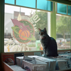 love garden kitteh. (tumbleweed.in.eden) Tags: music film cat mediumformat lawrence downtown kodak kitty hasselblad melly 500cm lovegarden ektar100