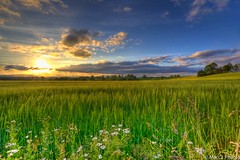 Holumveien (CJsarp) Tags: summer beautiful field barley norway wonderful crops canon5d akershus klfta magicallight holumveien