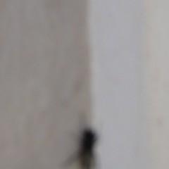 Scaraventato fuori (plochingen) Tags: city urban italy abstract blur square kitten italia no motionblur squareformat astratto italie ville icm flou citta quadrato abstrakt carré derive urbain quadrat filé abstrait sfocata intangible lowfrequency