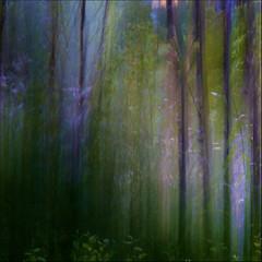 Monet in the air ... (rita vita finzi) Tags: trees nature experiments twilight colours ghosts icm ritavitafinzi