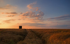 A BYGONE ERA (Steve Boote..) Tags: light sunset windmill field clouds landscape golden dusk ruin northumberland northumbria crops cramlington manfrotto northeastengland sigma1020f456exdchsm canoneos7d singhrayfilters steveboote