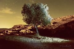 Soledad... (Mari Solete) Tags: luces estrellas rbol nocturna soledad almera oscuridad canon60d