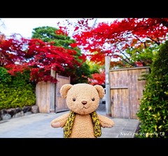 ( ()) Tags: japan maple kyoto olympus   zuiko e30     1454