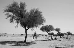 Shepherd of camels (SAUD ALRSHIAD) Tags: life camera light sky bw black sahara nature monochrome lens landscape photography photo sand nikon shoot natural photos ngc camel saudi sands riyadh ksa saud saudia    landscab kingdoom   nikonflickraward  nikonflickrawardgold nikond7000 msawr saudarshiad saudalrshiad