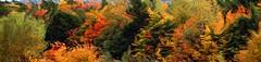 Liquid Autumn (Gary from Newfoundland II) Tags: autumn colours autumncolors