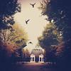 . (tsienni) Tags: schönbrunn vienna wien park autumn color colour tree bird nature architecture austria österreich pigeon herbst natur cage architektur schloss voliere taubenhaus