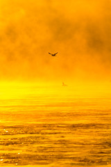 Burning Haze (ken.krach (kjkmep)) Tags: sunrise river maryland susquehanna susquehannastatepark