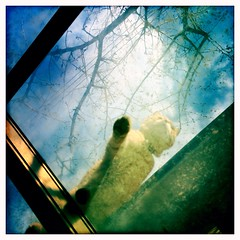 morning sky window cat sunroom hipstamatic iphone5s... (Photo: SOVA5 on Flickr)