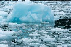 _MG_5078a (markbyzewski) Tags: alaska ugly iceberg tracyarm southsawyerglacier