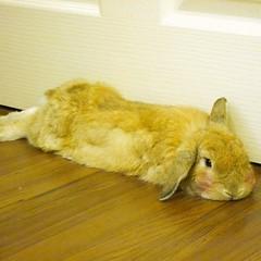 เซ็งจุงเบย....งวดนี้ยังไม่ได้เลขเด็ดเลยครับ ^^  #littlebanoffee #rabbit #bunny facebook.com/little.banoffee instagram.com/littlebanoffee