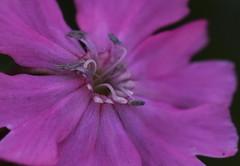 DSC_1139 (PeaTJay) Tags: flowers plants macro nature gardens fauna outdoors reading flora sigma micro closeups berkshire lowerearley nikond750