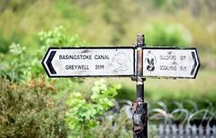 Basingstoke Canal West Byfleet 19 May 2016 069 (paul_appleyard) Tags: sign canal signpost pointing basingstoke fingerpost