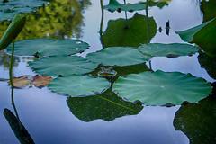 DSC04542-44_HDR (Capt Kodak) Tags: photomerge atlantabotanicalgarden dalechihuly glasssculpture chihulyinthegarden niksoftware hdrefexpro2 nikcollectionbygoogle everynowandthenyouneedalittleculture