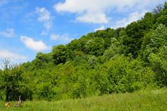 zölderdő / greenforest (debreczeniemoke) Tags: blue sky green forest landscape spring meadow ég tavasz tájkép zöld erdő kék rét olympusem5