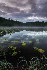 Forest lake (Andrei Reinol) Tags: morning travel sky mist lake tree water vertical fog clouds forest sunrise suomi finland landscape europe outdoor atmosphere serene