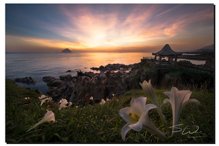 Peaceful lilies,  和平島, Taiwan