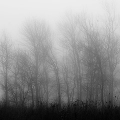 Lakeside Fog 042 (noahbw) Tags: autumn trees light blackandwhite bw mist abstract monochrome silhouette misty fog forest square landscape blackwhite still woods nikon quiet natural branches shoreline foggy shore stillness d5000 noahbw