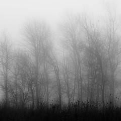 Lakeside Fog 042 (noahbw) Tags: autumn trees light blackandwhite bw mist abstract monochrome silhouette misty fog forest square landscape blackwhite still woods nikon quiet natural branches shoreline foggy shore stillness d5000 noahbw