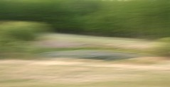 Ardrossan Spring Colours (ebergcanada) Tags: abstract green landscape spring panning icm intentionalcameramovement arborealimpressions