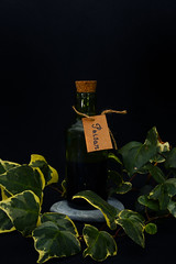 Envy (JasmineBolland) Tags: green dark ivy poison envy symbolism sevendeadlysins
