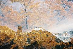 (Kevin Orbitz) Tags: flowers mountain fall film nature argentina 35mm landscape nikon kodak doubleexposure ishootfilm 35mmfilm mountainside 35mmphotography kodakfilm nikonfe2 kodak200 filmphotography filmroll filmburn filmisnotdead kodakcolorplus westillshootfilm