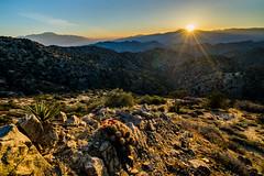 Joshua Tree 08.jpg (sagefool5) Tags: california camping nature landscape nationalpark unitedstates desert outdoor joshuatree 2016joshuatree