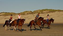 Belgian coast (Natali Antonovich) Tags: portrait horses horse nature animal seaside mood lifestyle horsemen tradition relaxation seashore seasideresort horseman belgiancoast wenduine seaboard