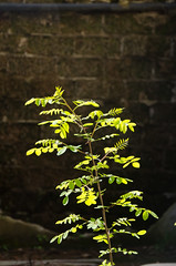 PGG_7619 (Alberto Nocentini) Tags: panorama muro primavera nikon estate ombra natura sole piante paesaggio pianta immagine emozioni soggetto emozione estete d7000