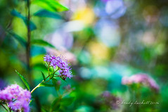Farben der Natur (brady tuckett) Tags: industar 502 f35 industar502f35 garden grten legacylens leaves leaf colors color bradytuckett brady tuckett russianlens russia m42 m42lenses m42mount light sun sunshine nature bokeh blur green