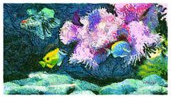 Anemona neighbors (Leo Bar) Tags: fish artwork art aquarium anemone flora fauna colors environment ecology exotic beauty painting pixinmotion leobar clownfish tropical reef corals netartii awardtree untouchabledream