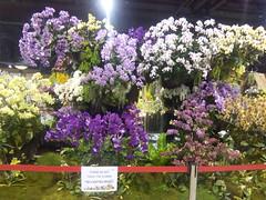 IMG_20160321_111410 (Sasha India) Tags: flowers orchid thailand orchids bangkok exibition apoc   apoc12