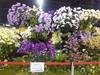 IMG_20160321_111410 (Sasha India) Tags: flowers orchid thailand orchids bangkok exibition apoc таиланд бангкок apoc12