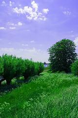 FA_005 (Dutch_Chewbacca) Tags: nature netherlands spring fort sunny dijk brabant 1877 landschap 1880 waterlinie nieuwe 1847 altena brabants hollandse uppel gantel uppelse schanswiel