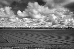 Gladden Velde (Dex Horton Photography) Tags: blackandwhite canada monochrome bc britishcolumbia farm farmland fields ladner tutorial lightroom gladdenvelden